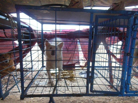 dogs in cages at moonlight circus