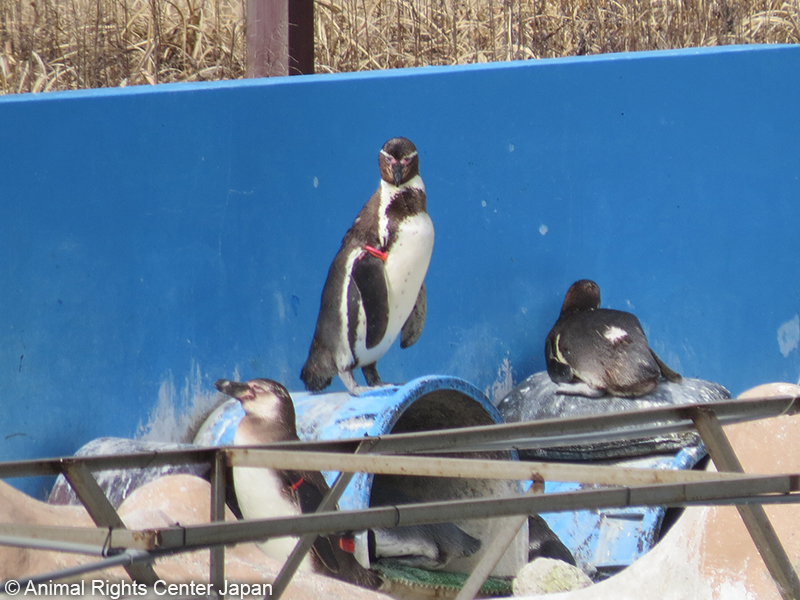 abandoned penguins