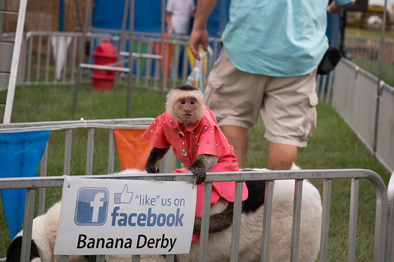 monkey and dog in race