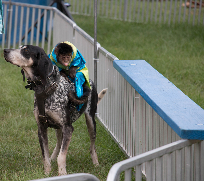 dog and monkey in race