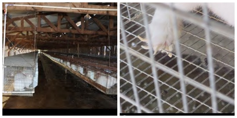 End the Use of Animals as Living Factories | PETA