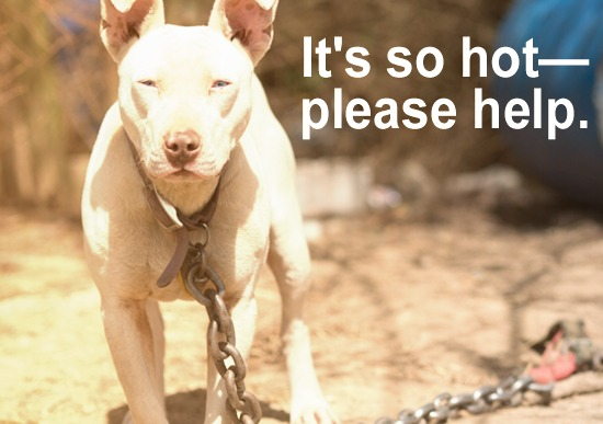 Dogs can die in the heat. Please help them.