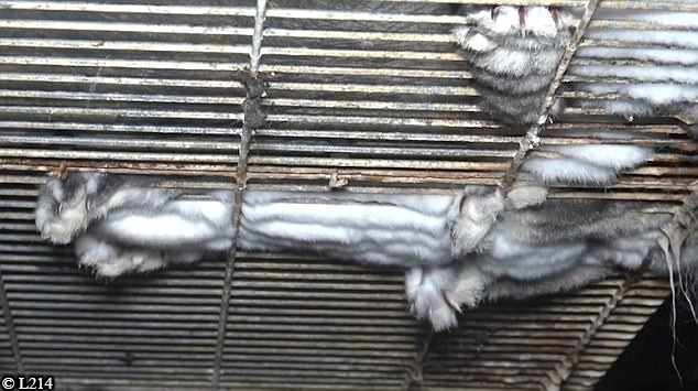 rabbits foot pressed through cage
