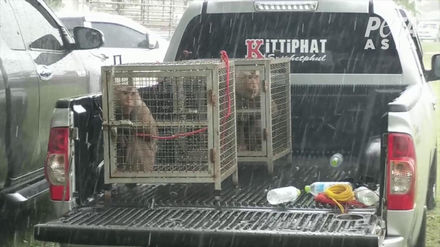 photo of monkeys in cages on the back of a pickup truck