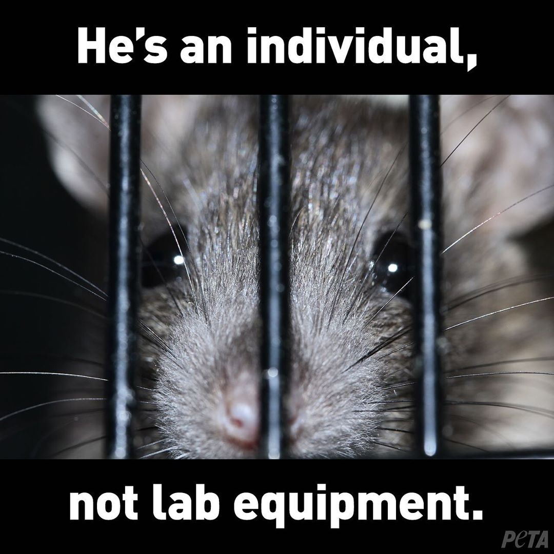 "photo of mouse in cage with text that says ""he's an individual, not lab equipment"""