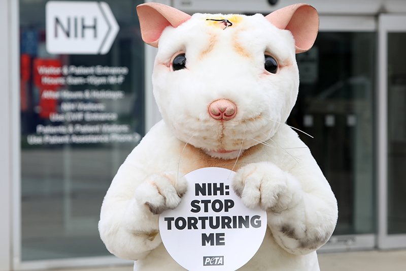 mouse standing in front of NIH