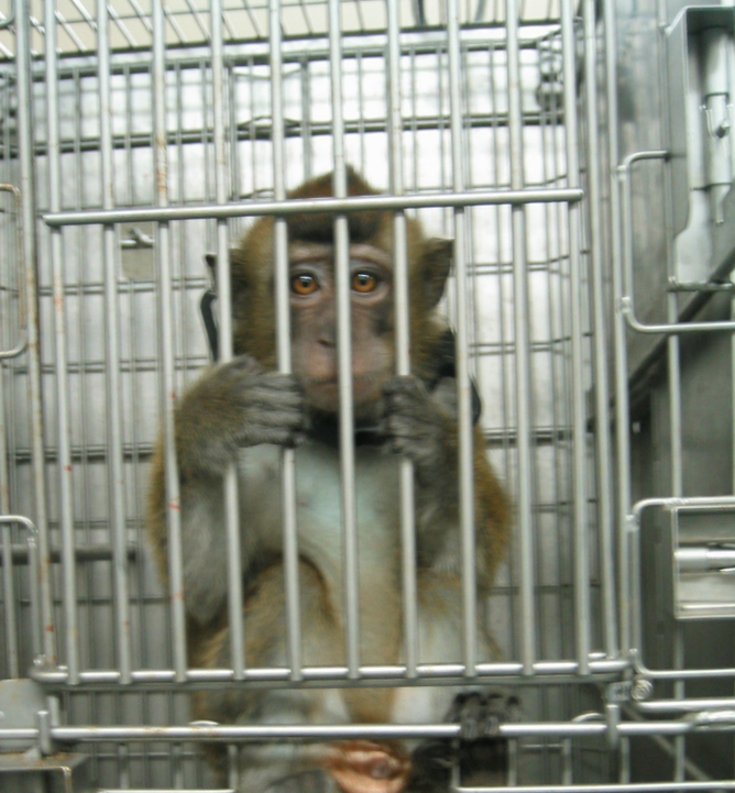 monkey in lab