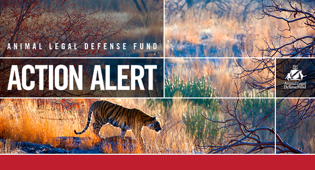 Animal Legal Defense Fund - Action Alert