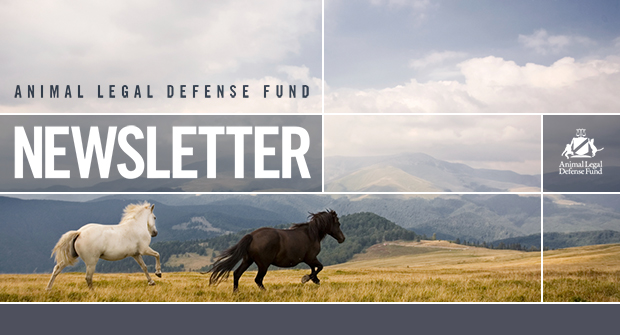 Animal Legal Defense Fund - Newsletter
