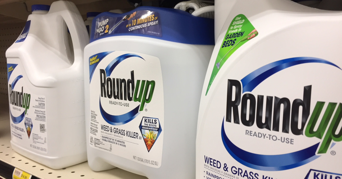 blue and white bottles of Monsantos glyphosate herbicide ROUNDUP on store shelves