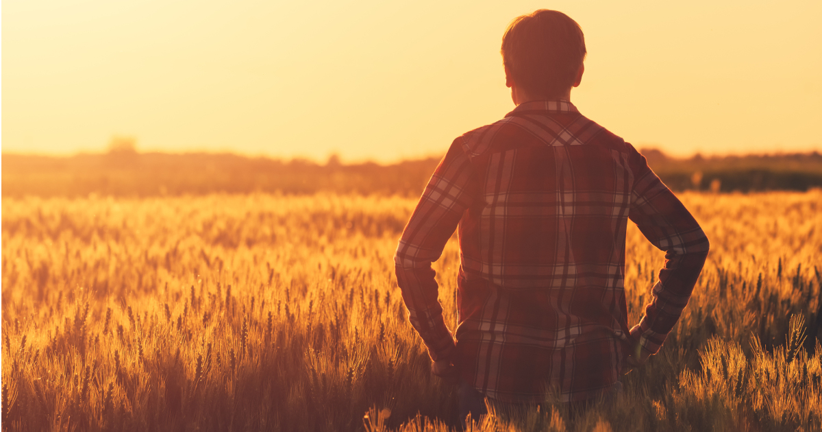 farmer in flannel standing in a wheat crop field on a farm at sunset