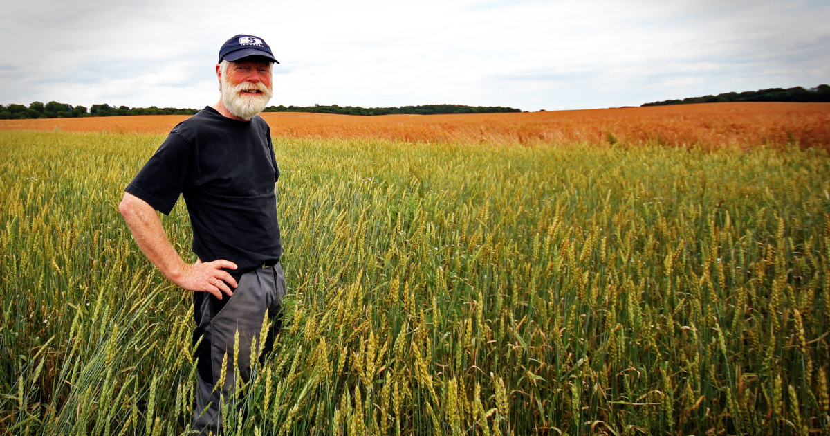 farmer standing in a crop field