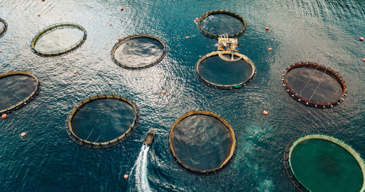fish farm nets in the ocean