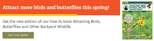 Attract more birds and butterflied this spring!