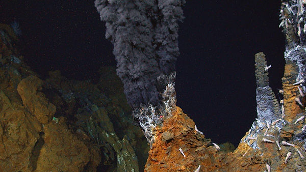 hydrothermal vents