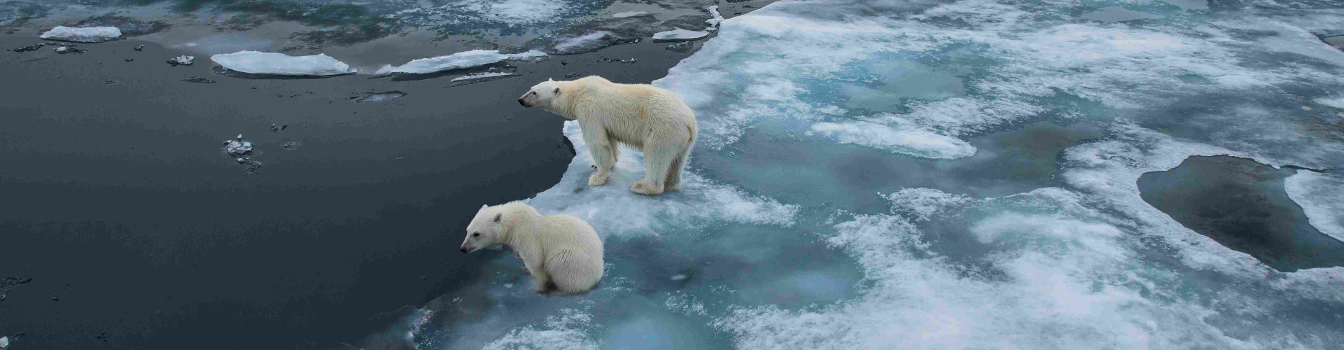 Support an immediate HFO ban in the Arctic Canadian
