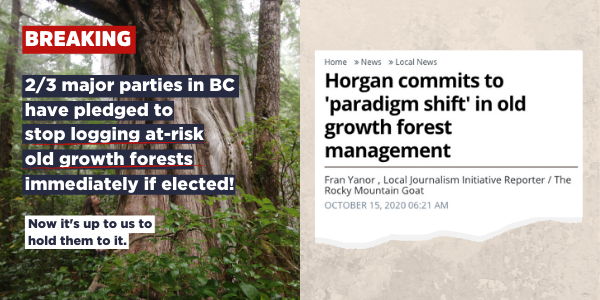 Graphic and newspaper headling showing that the NDP committed to stop logging at-risk old growth