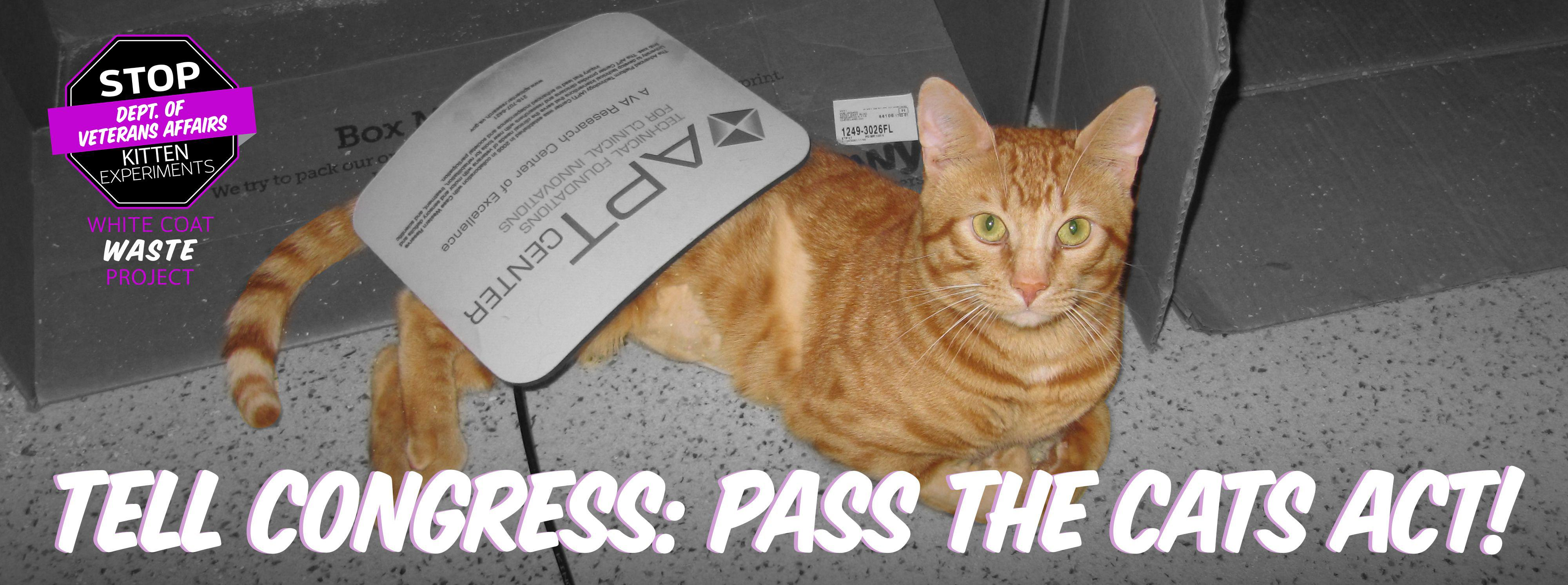 Tell Congress: Pass the Cats Act!